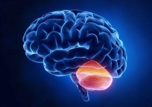 smegeneles; kudikio galvos apimtis